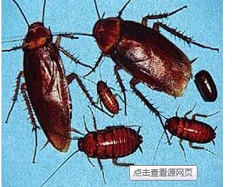 苏州灭蟑螂